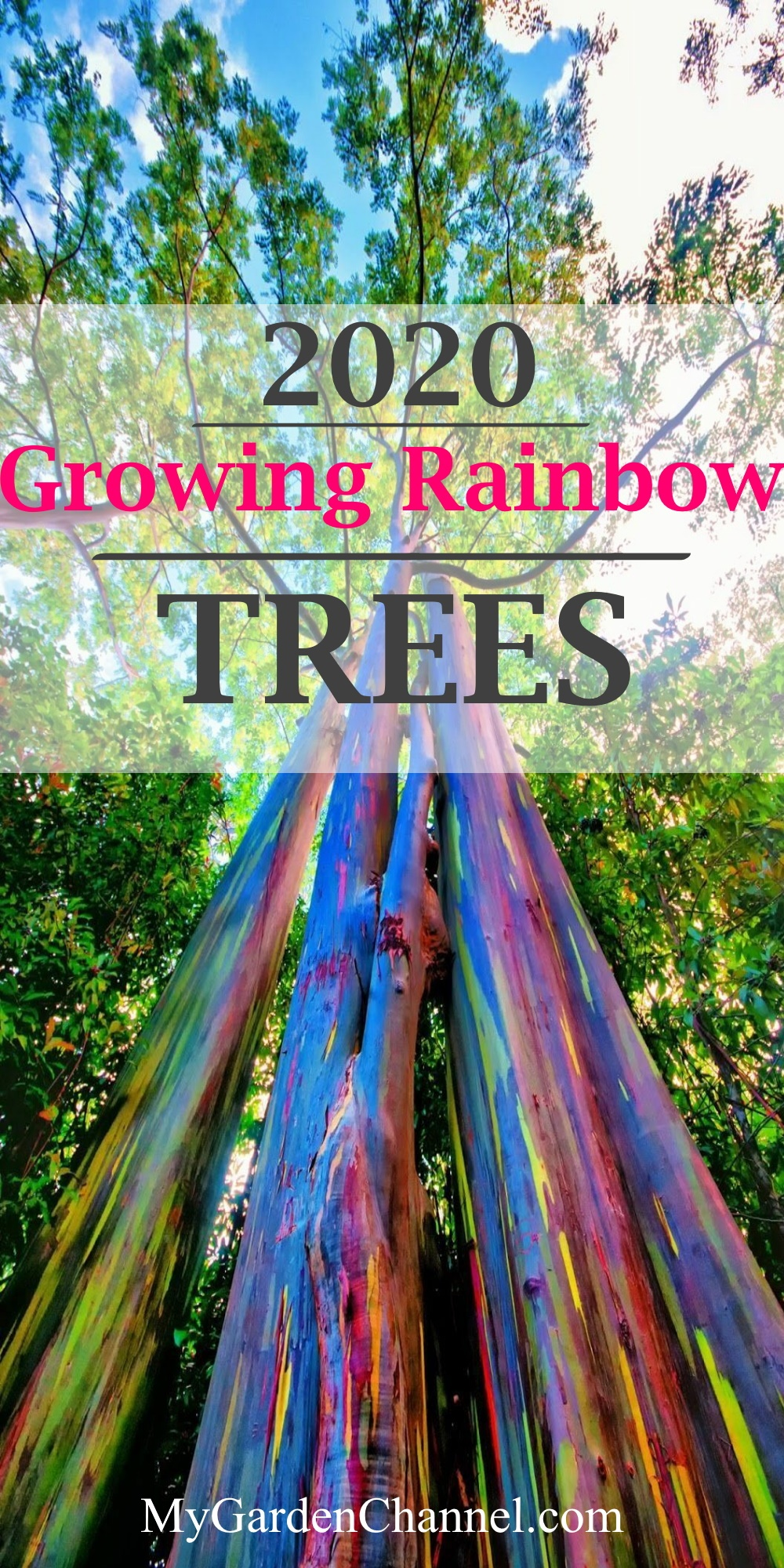 Growing Rainbow Trees is Amazing