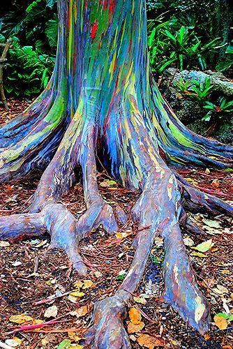 growing rainbow trees