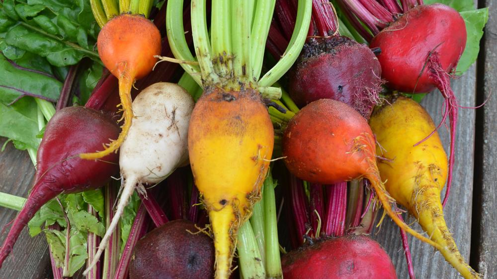 Recipe: Roasted Beets with Mint Yogurt - Seed Savers Exchange