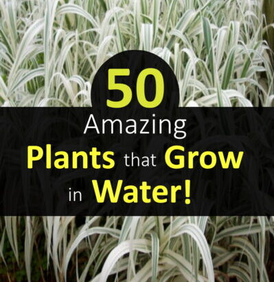 50 Plants That Grow In Water (Amazing Tips) Shocking Truth!