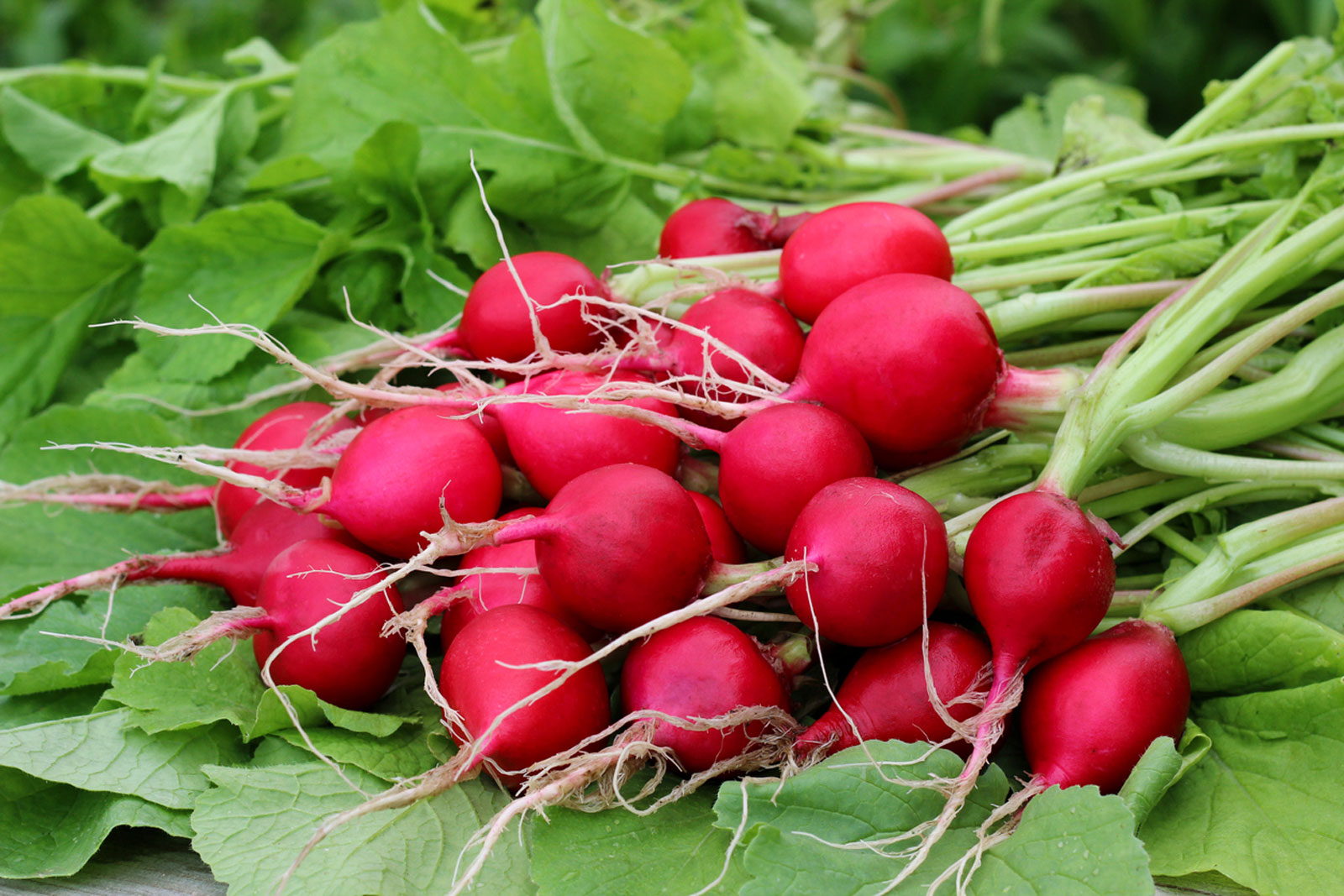 vegetables you can plant in september