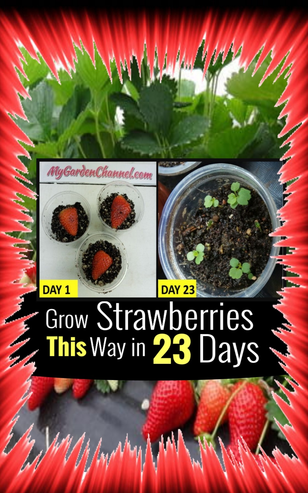 How To Grow Strawberries From Seeds (Try This)