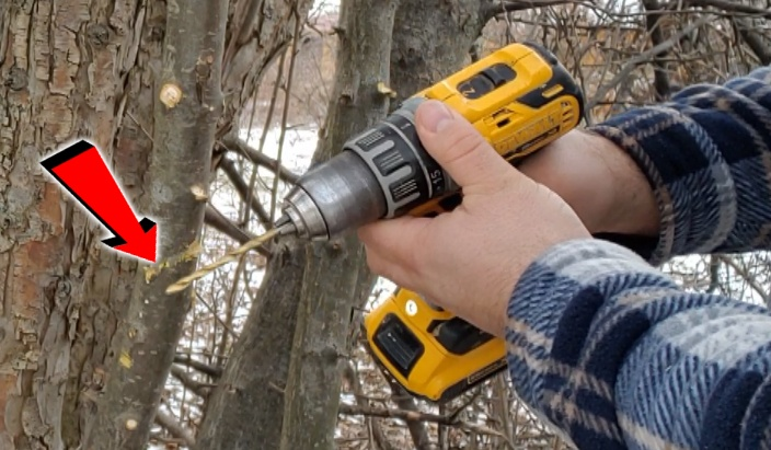 How To Grafting a Tree (WITH A DRILL?!) Simple Way!
