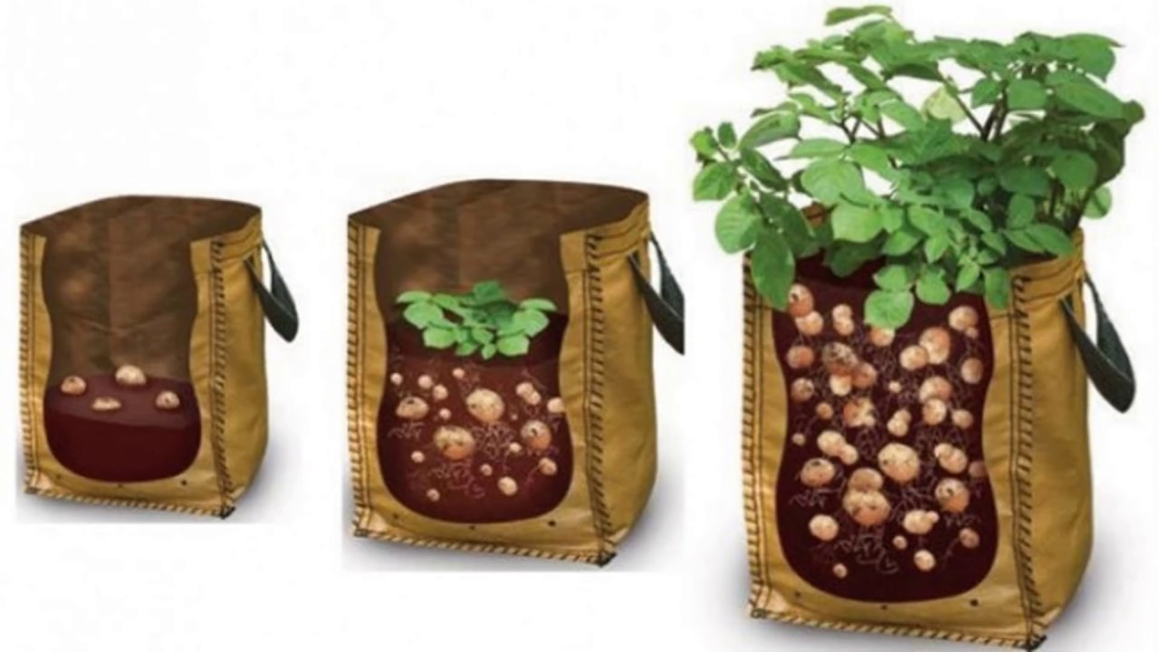 How to Grow Potatoes in a Bag | Apartment Gardeners!