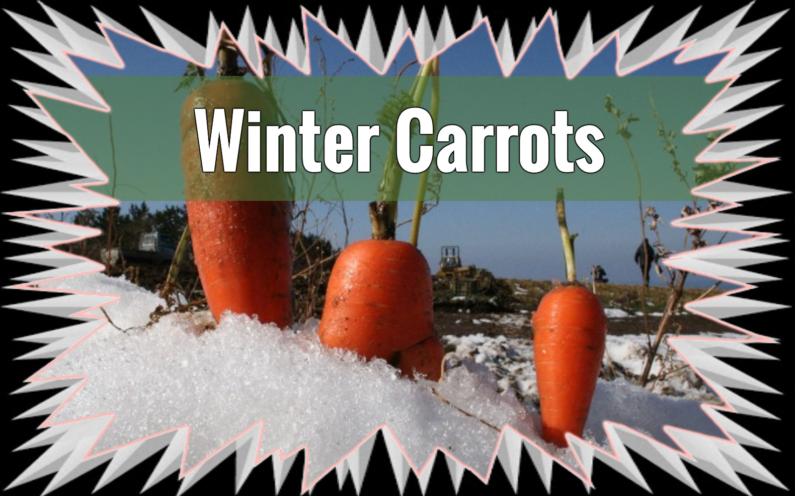 Vegetables You Can Grow in January