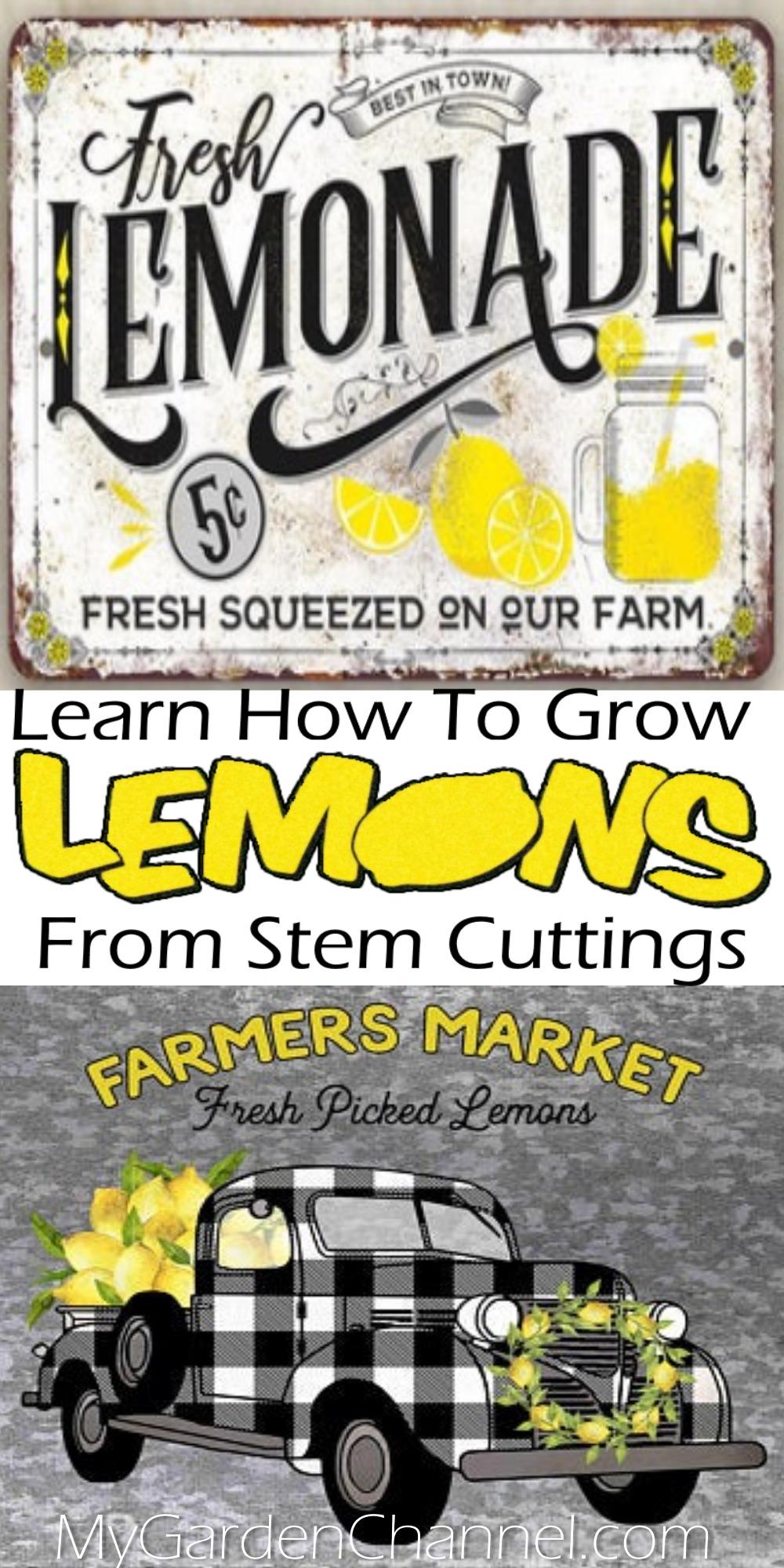 growing lemons from cuttings