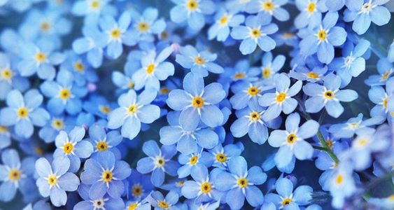 Forget Me Nots (All About Them)
