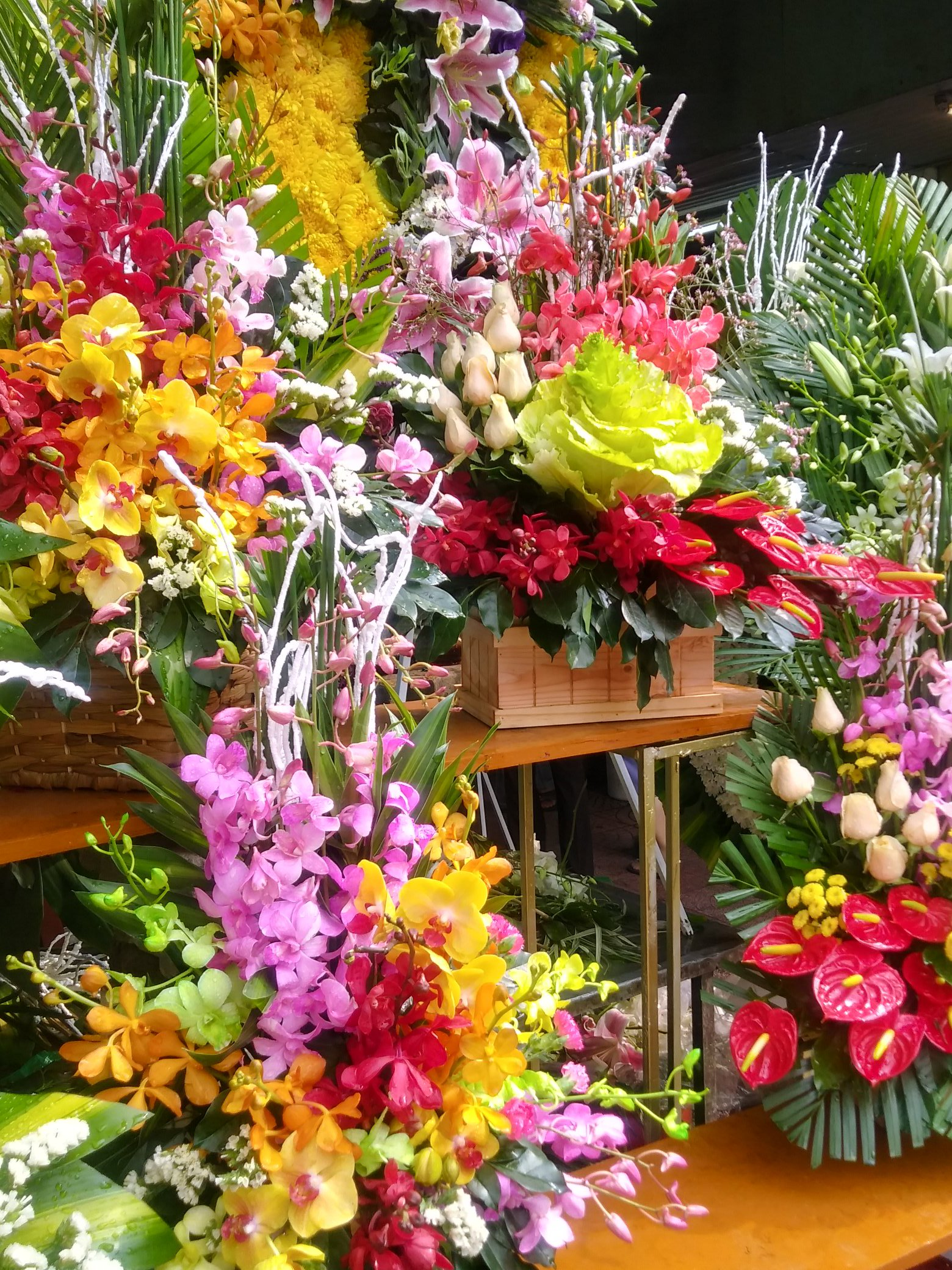 An abundance of orchids, everywhere