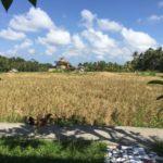 バリ島、Burat Wangi(ブラット・ワンギ)一日の終わりに石鹸を泡立てる。