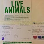 猫の検疫、ペットの移民。香港発台北行き 搭乗券と空港での流れ