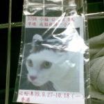 台湾大学付属動物病院で隔離された日々