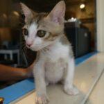 台湾の猫写真集。萌え尽きたっていいんだぜ(随時追加)
