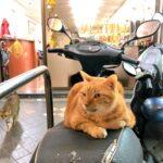 台湾に秋が来た。猫奴歓喜の季節到来だ。|台北生活日記