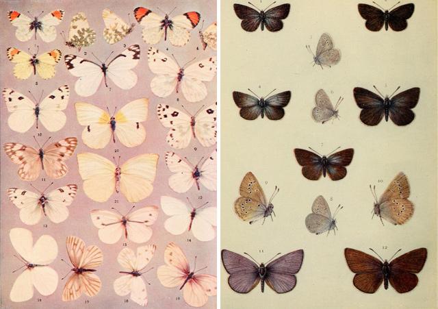 1_borboletas