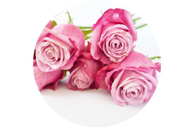 floriografia-rosa-1