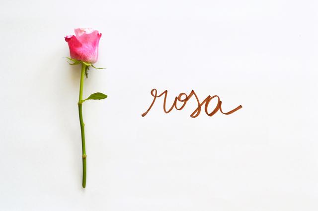 floriografia-rosa-2