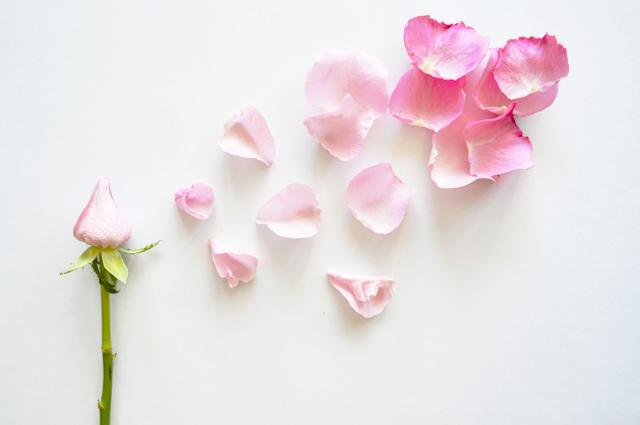 floriografia-rosa-3