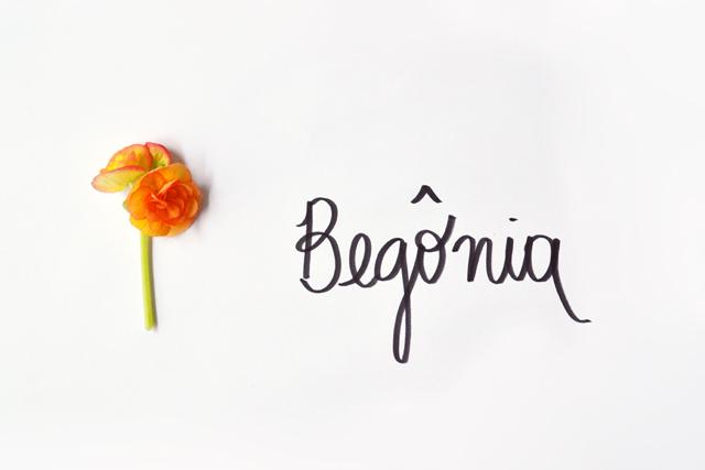 floriografia-begonia-2