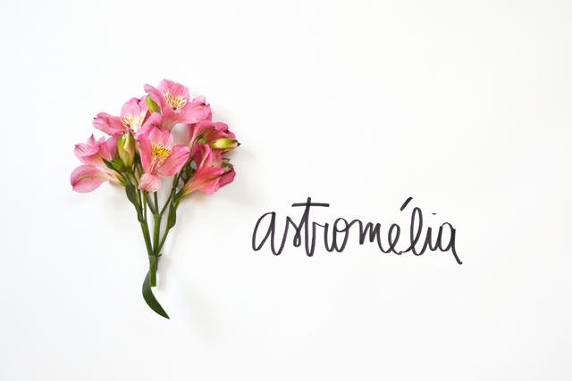 floriografia-astromelia-2