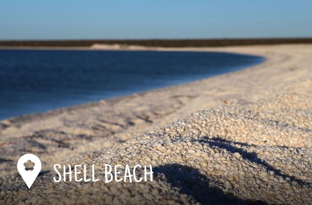 shell_beach