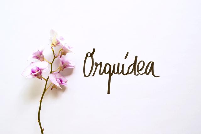 floriografia-orquidea-2