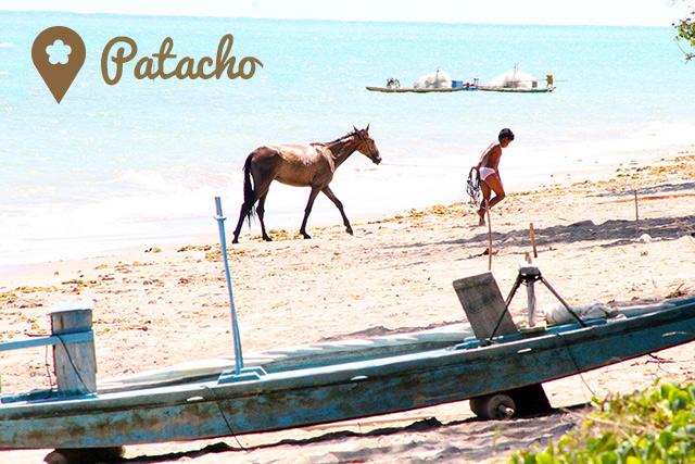 patacho2
