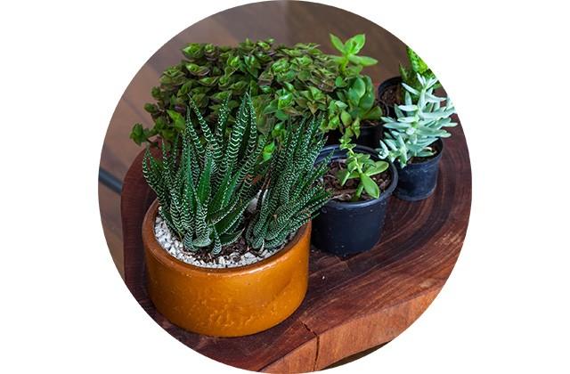 decoracao-adorofarm-plantas-casa-01