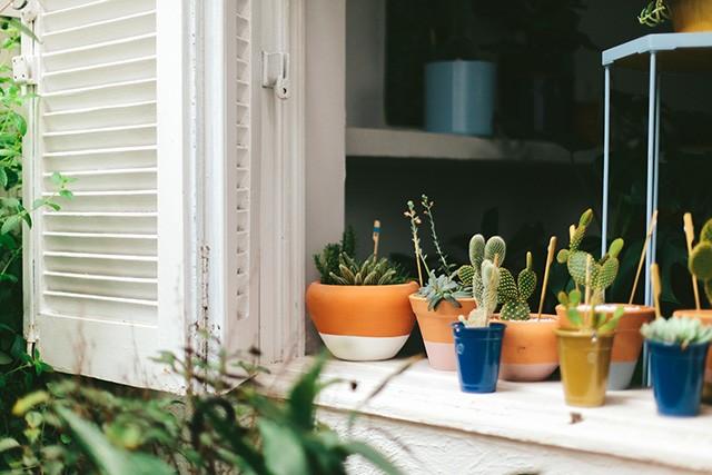 decoracao-adorofarm-plantas-casa-02