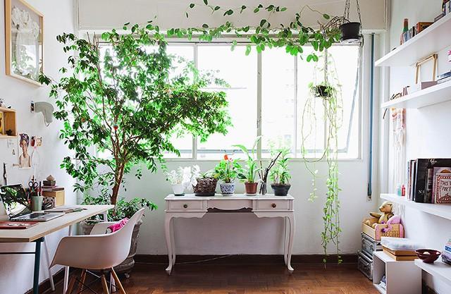 decoracao-adorofarm-plantas-casa-05