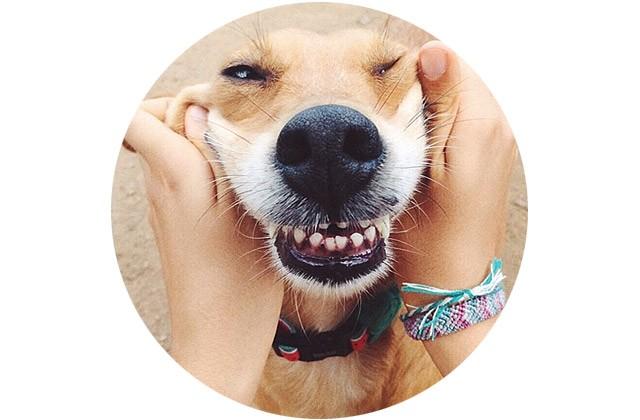 bola-zeedog