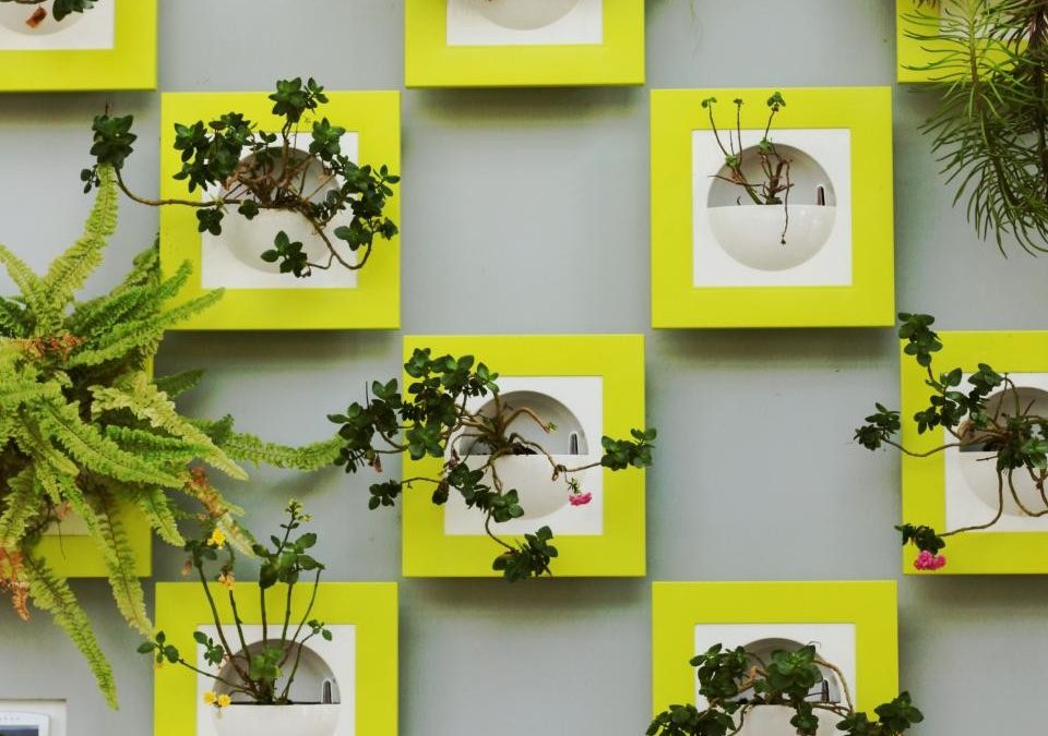 Using Frames in the Garden