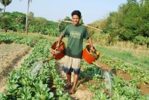 Plant fruit trees, paddy fields, veggie gardens to improve children's diet - Monthly Donation
