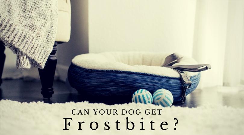 dog bed, leash, toys for dog, white floor