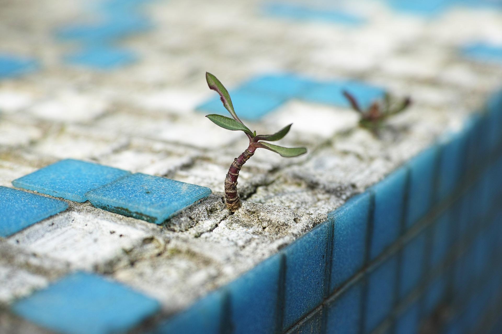 plant-2318936_1920