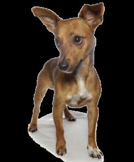 "Baxter ""Mortgage Pup"""