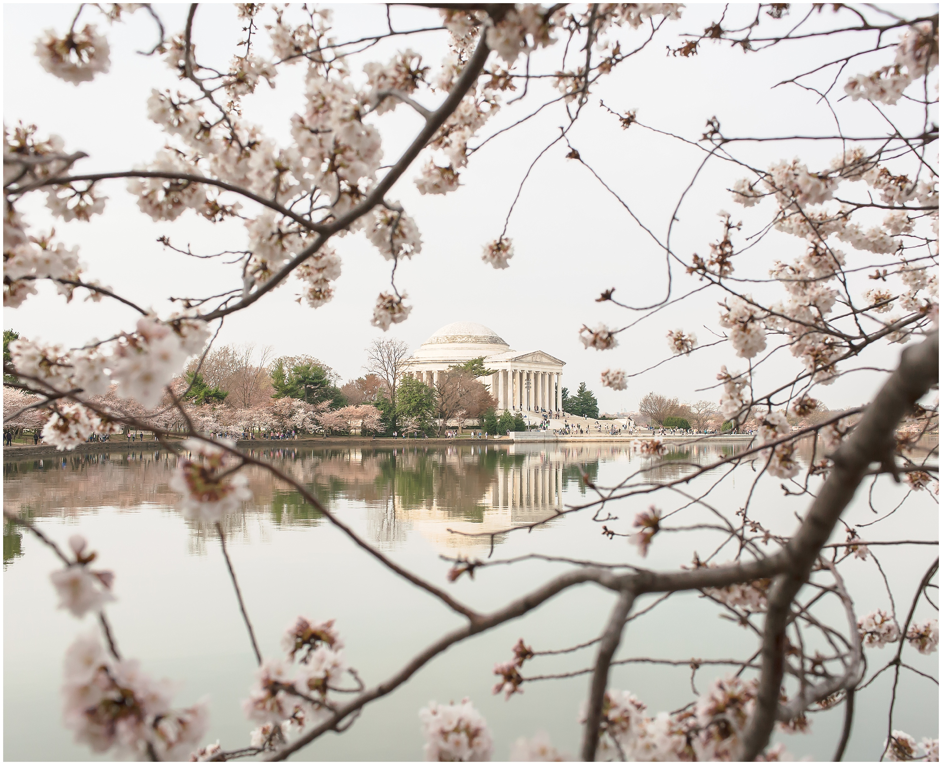 Cherry Blossom Festival, Tidal Basin, Jefferson Memorial
