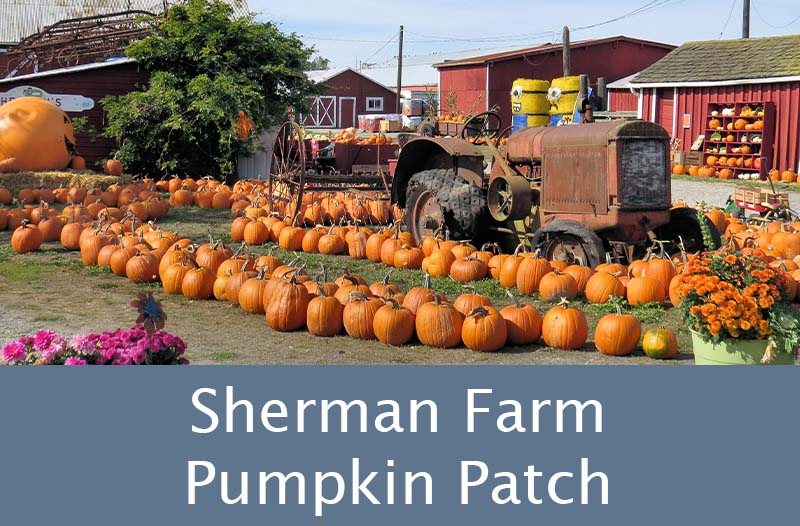 shermanfarmpumpkinpatch