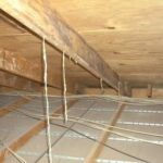 Termite Tubes in the rafters