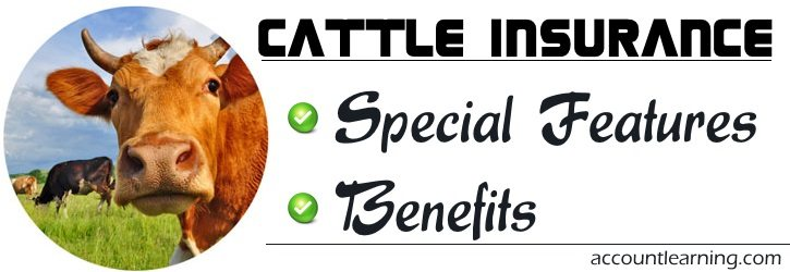 Cattle Insurance - Special Features, Benefits