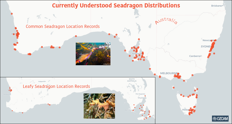 map showing common and leafy seadragon location records in Australia