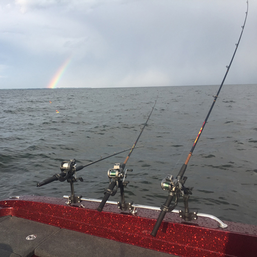 Fishing Poles in the water
