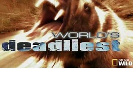 Worlds Deadliest