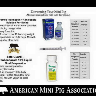 mini pig deworming