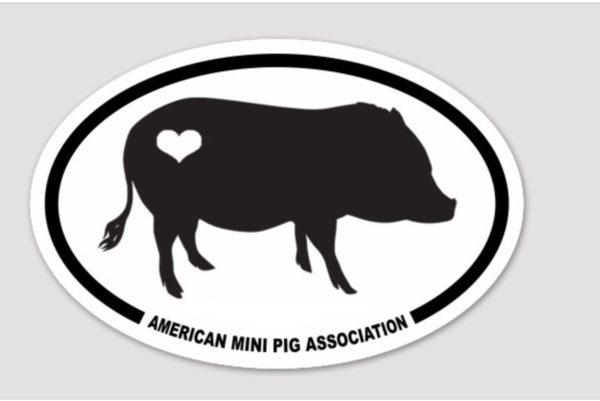 mini pig decals