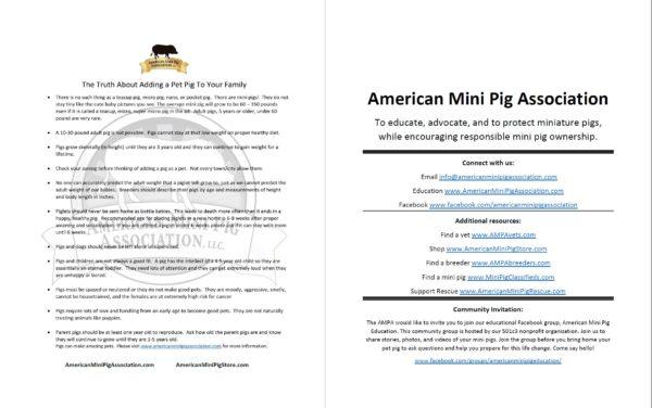 ampa ambassador educational packet
