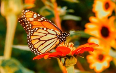 A Call to Action to Save the Monarchs
