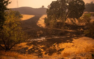 Wildfire Relief Goes to Farms to Meet Immediate Needs and Build Future Resilience