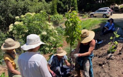 Vital Cycles Brings Permaculture Instruction to Solano County