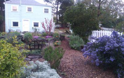 Get Back in the Garden: 2021 Garden Tour Reimagined!
