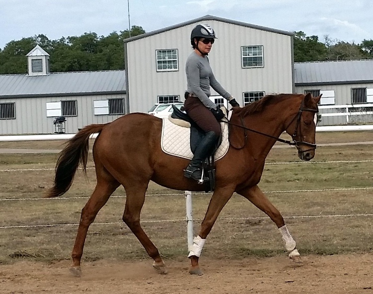 Suzanne Warmack bel canto farms riding chestnut horse